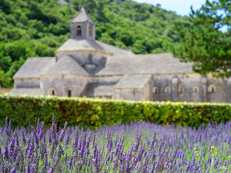 Lavender-recipe-800×600
