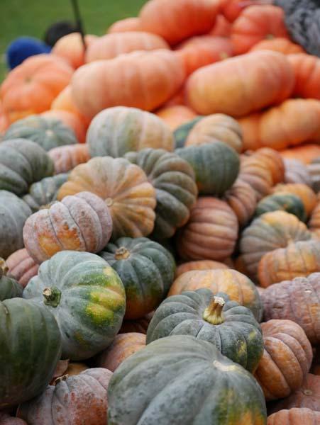 pumpkin-festival-ludwigsburg-20
