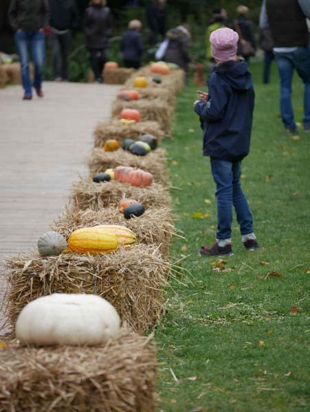 pumpkin-festival-ludwigsburg-27