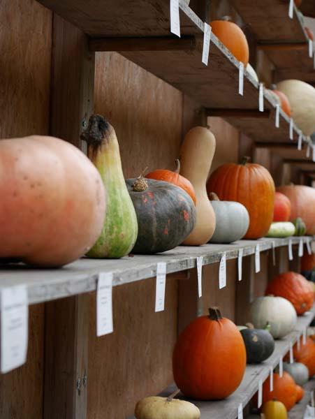 pumpkin-festival-ludwigsburg-36