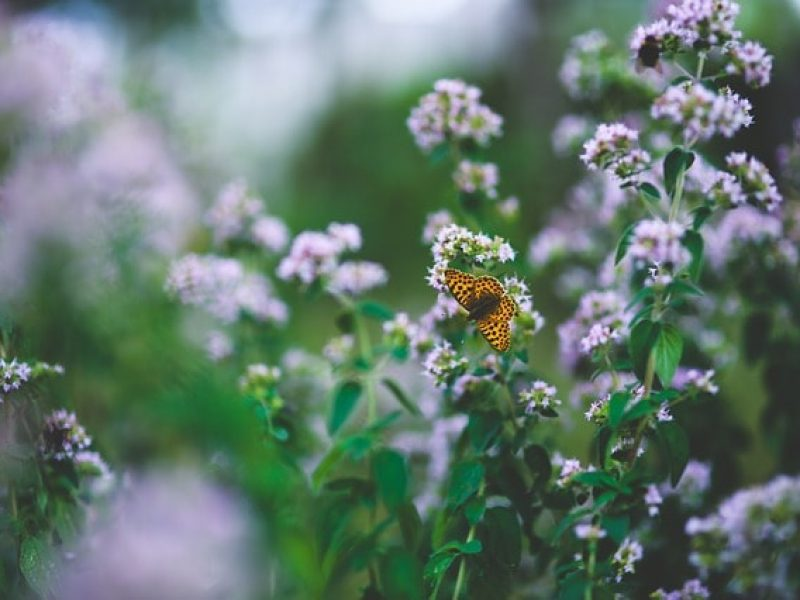 herbs-de-provence-1-800×600